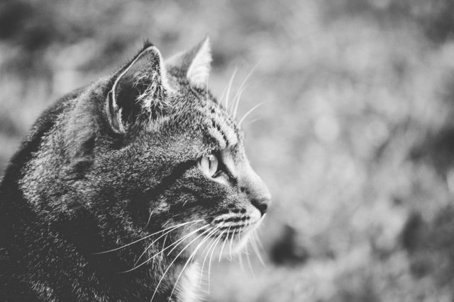 Adorable animal animal photography black and white blur
