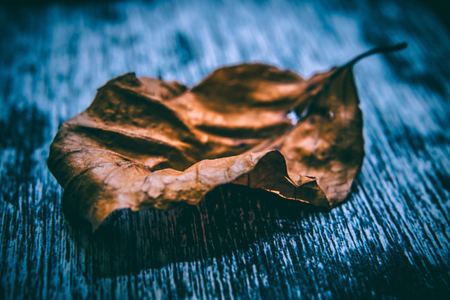 Art autumn leaf blur close up dry leaf