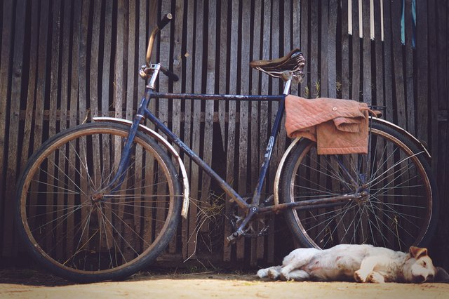 Animal bicycle bike dog fence