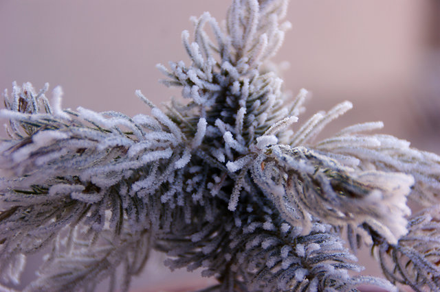 Blur close up cold frost hoarfrost