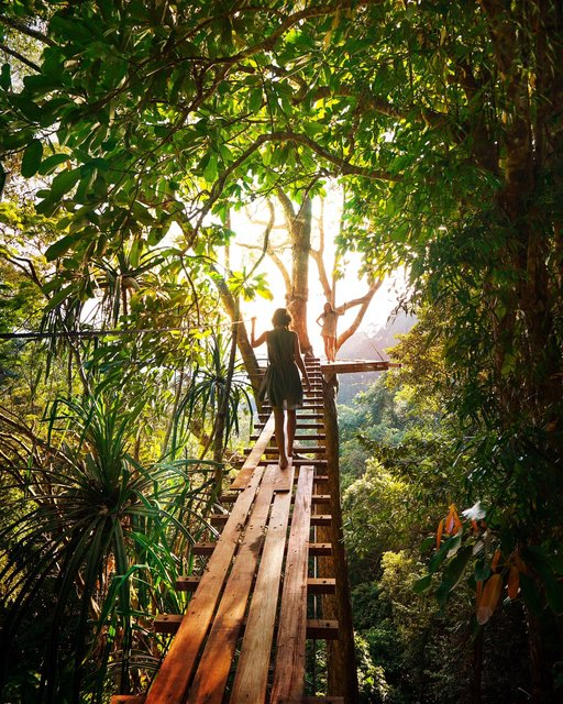 Adventure boardwalk branch bridge daylight