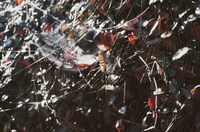 Abstract arachnid close up cobweb crawl