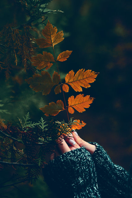 Autumn fall hands holding leaves