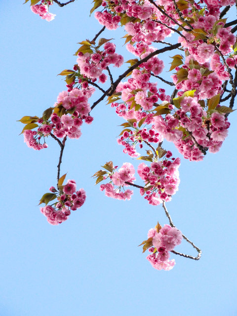 Beautiful flowers blooming branch bright color