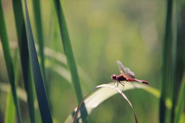 Biology blur close up dragonflies environment