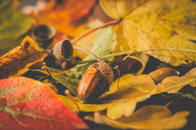 Autumn autumn colours fall leaves nut
