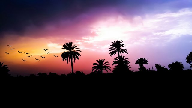 Birds coconut trees dawn dusk hd wallpaper