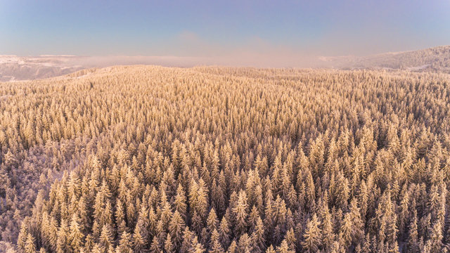 Aerial agriculture background cold conifer