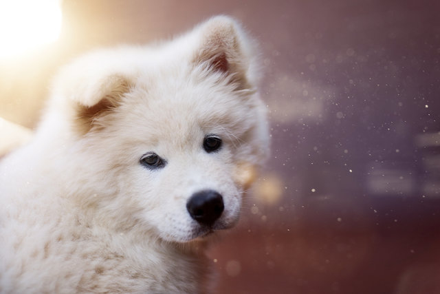 Adorable animal animal photography animal portrait blur