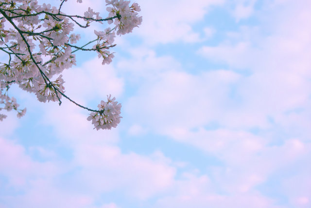 Bloom blossom blue sky branch bright