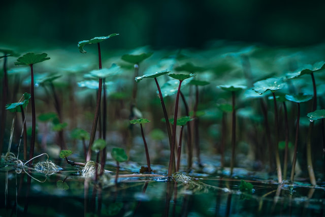Aquatic plants background beautiful beauty biology