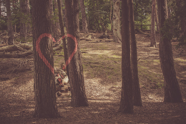 Environment fallen trees forest graffiti heart