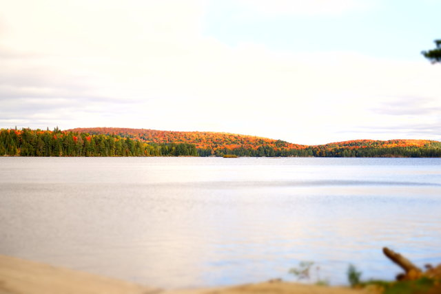 Algonquin provincial park canada daylight environment fall