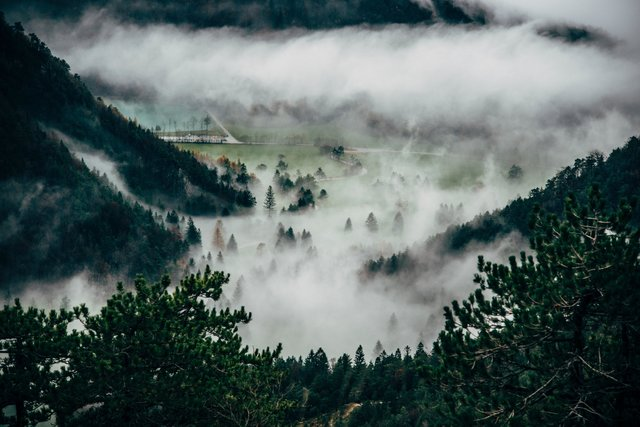 Cloudy conifers countryside environment fir trees