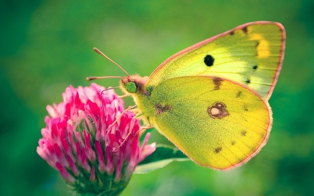 Butterfly nature natural flower green