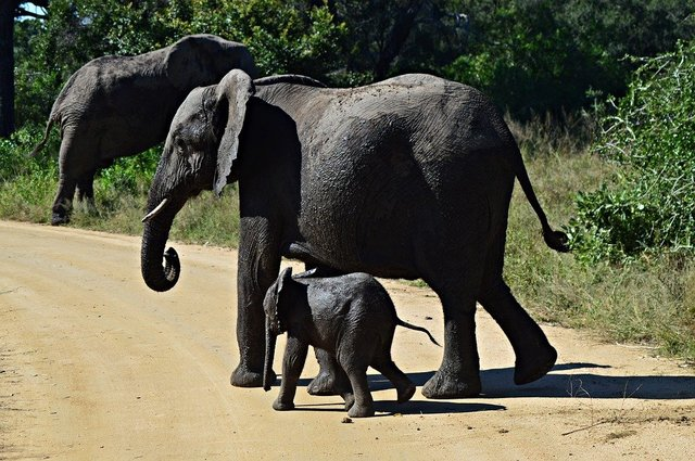 Elephants young wildlife nature animals