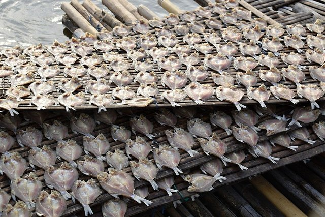 Fish more dried fish indonesia