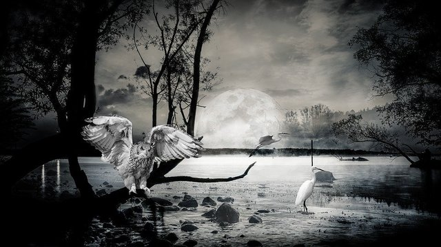 Composing lake ibis owl atmospheric