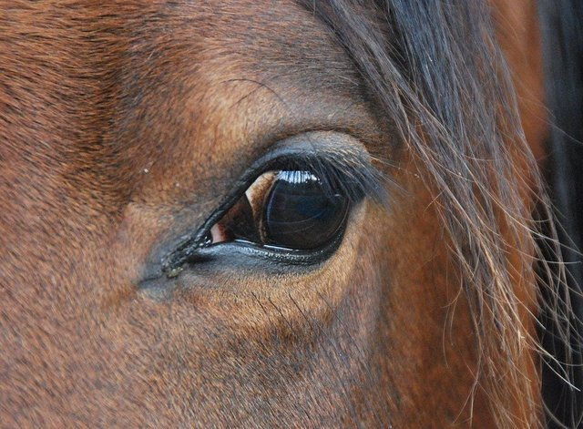 Animal nature horse eye view