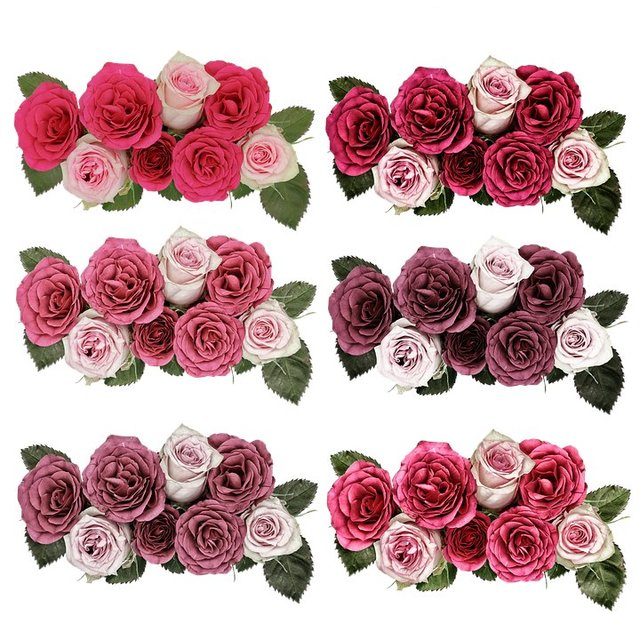 Roses flowers rose flower pink garden