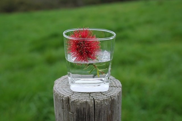 Bottle brush flowers in a cup informal decorative