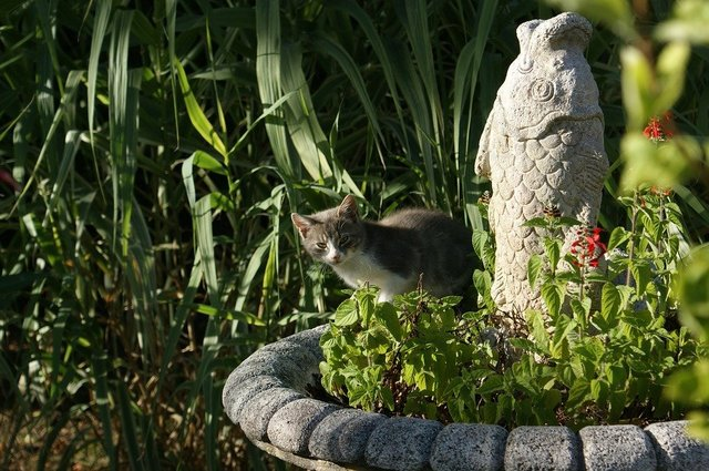 Cat hidden fish statue