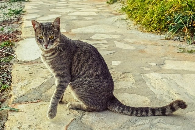 Cat stray tabby animal looking