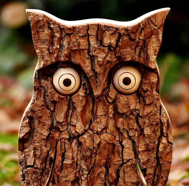 Owl tree bark animal autumn fall leaves