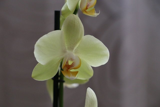 Orchid flower blossom plant floral