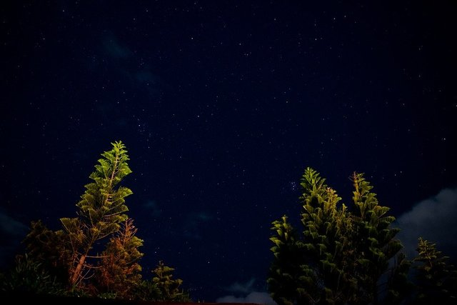 Landscape stars astrophotography trees