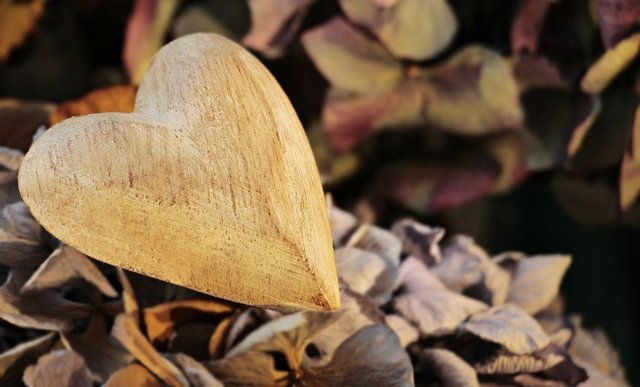 Heart wooden heart wood love nature