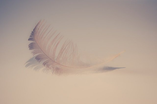 Feather soft sweet feathers background