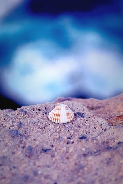 Shell sea water blue sand
