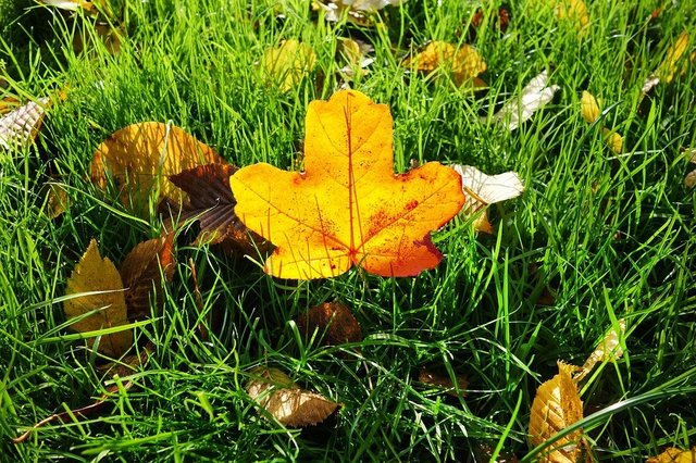 Leaf autumn leaf grass fallen leaf autumn colors