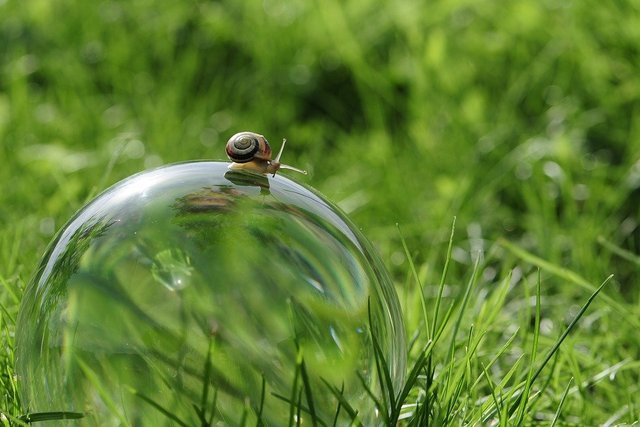 Snail glass ball nature globe image ball