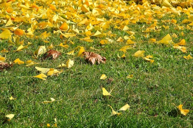 Colorful leaves fallen leaves yellow leaves