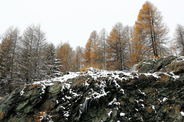 Forest larch rocks winter the height of the