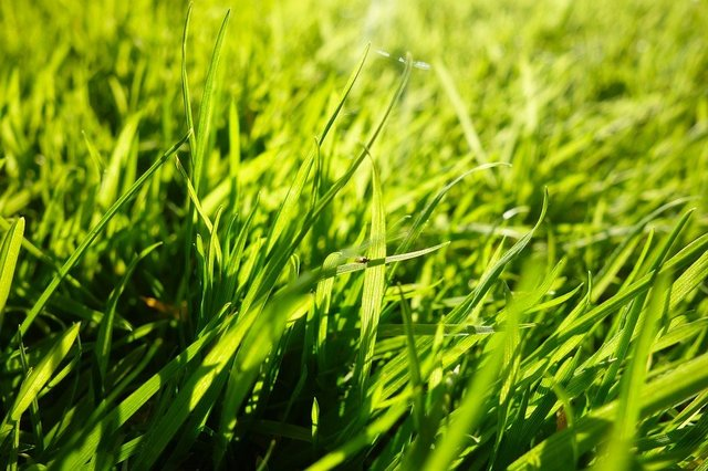 Grass grass blades lawn ground covering macro