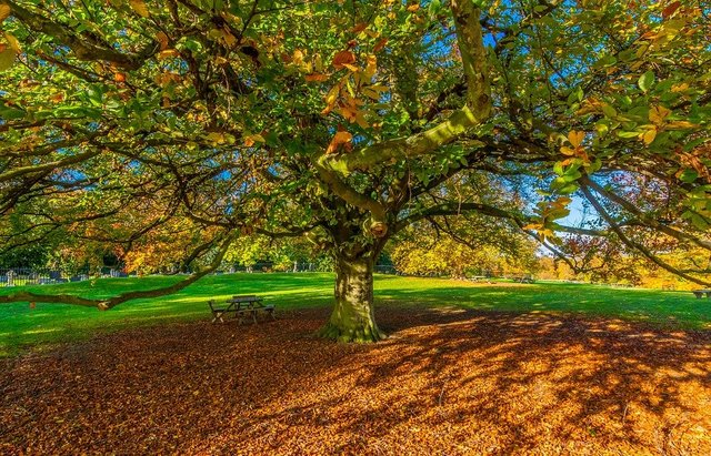 Autumn leaves desktop wallpaper yorkshire shadow