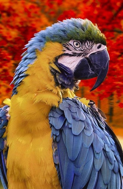 Parrot ara forest bird nature