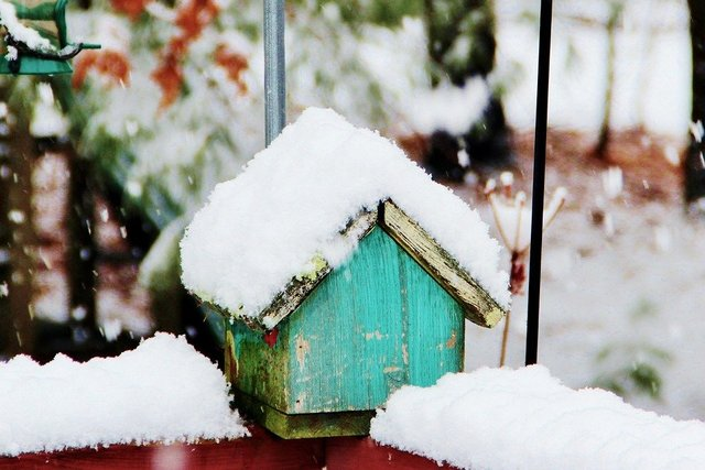Snow winter birdhouse cold white