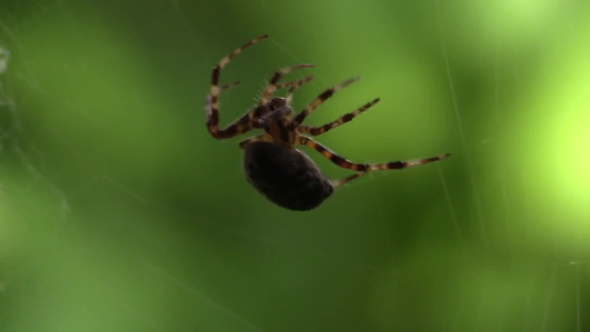 Video of spider