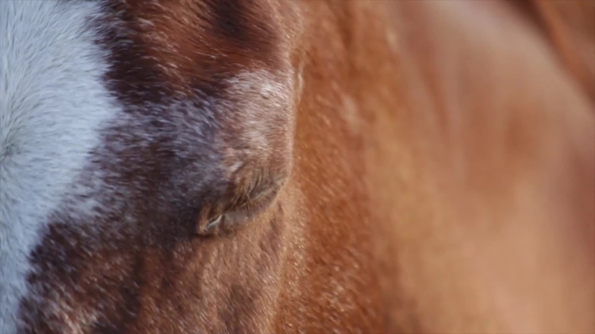 Close up video of a horse