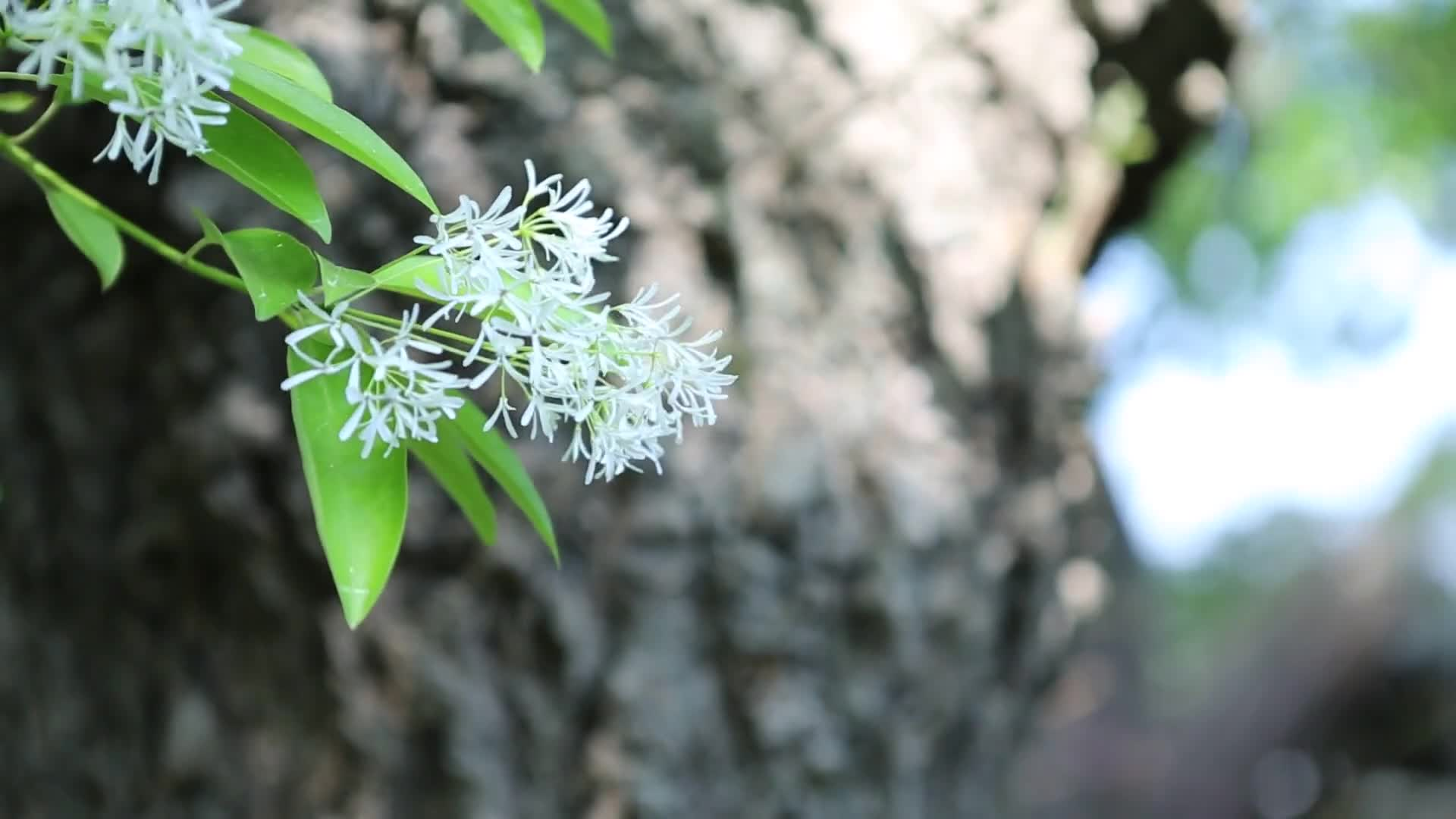 Close up video of flower