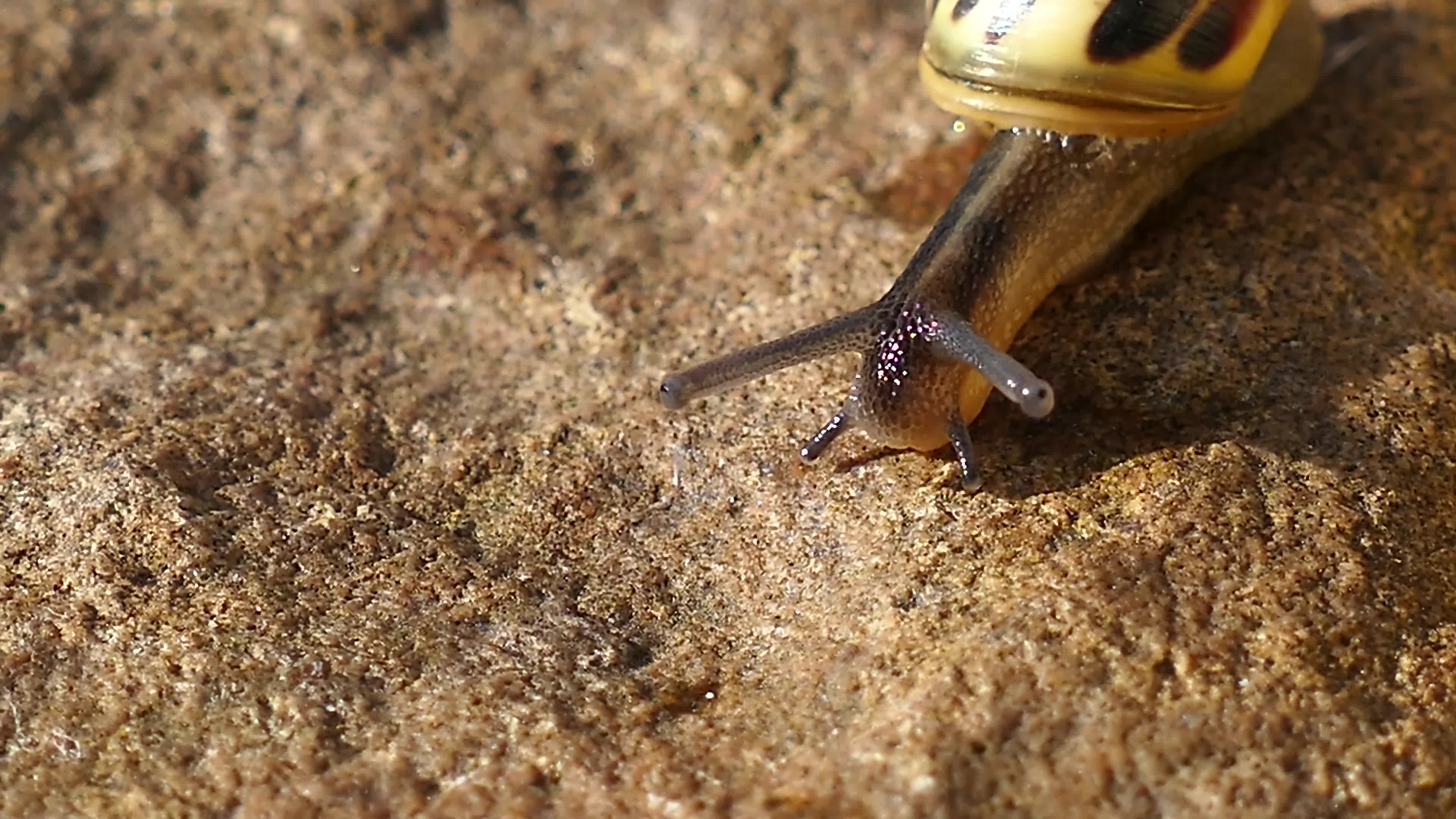 Close up video of snail