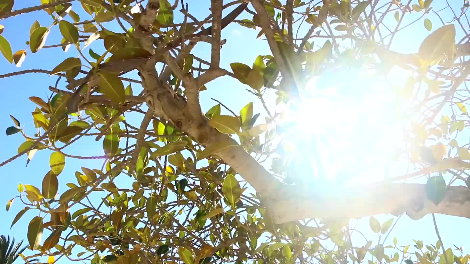 Video of tree with sun glaring