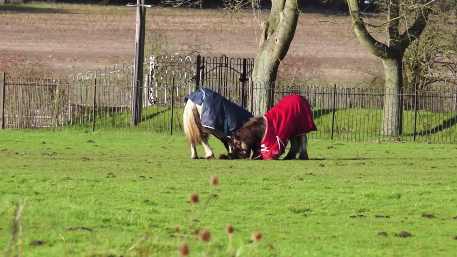 Two horses playing on grass field