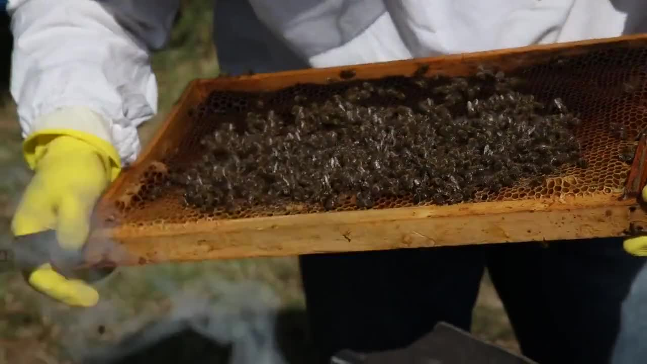 Video of honey production