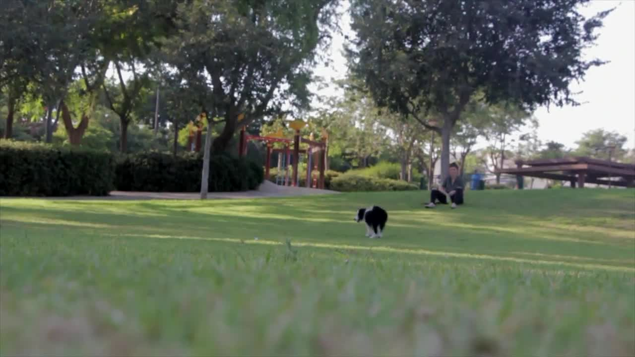 Dog fetching park play pet