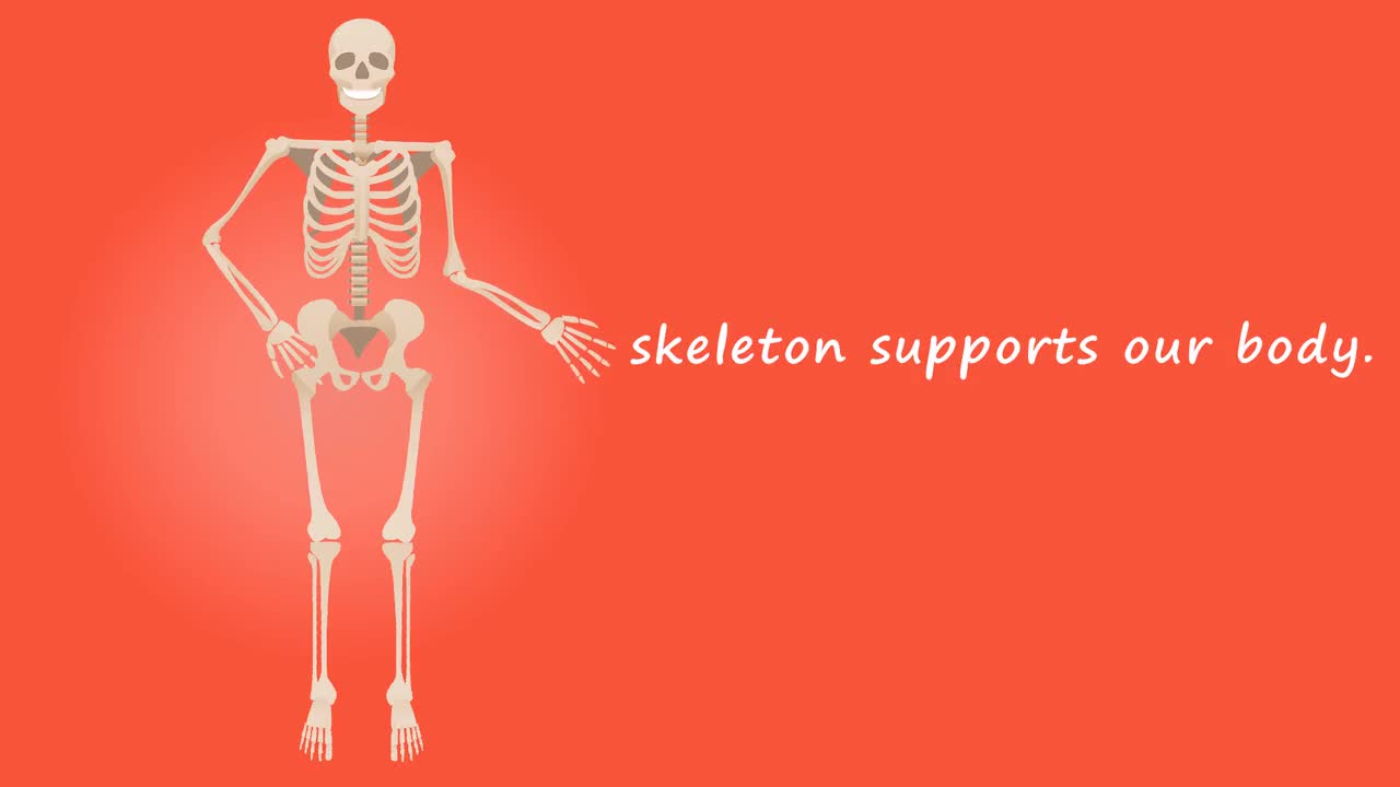 Human skeleton anatomy medical body